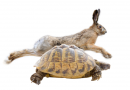 The tortoise versus the hare!
