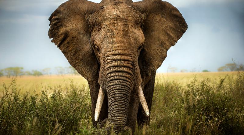 Beware the elephant traps